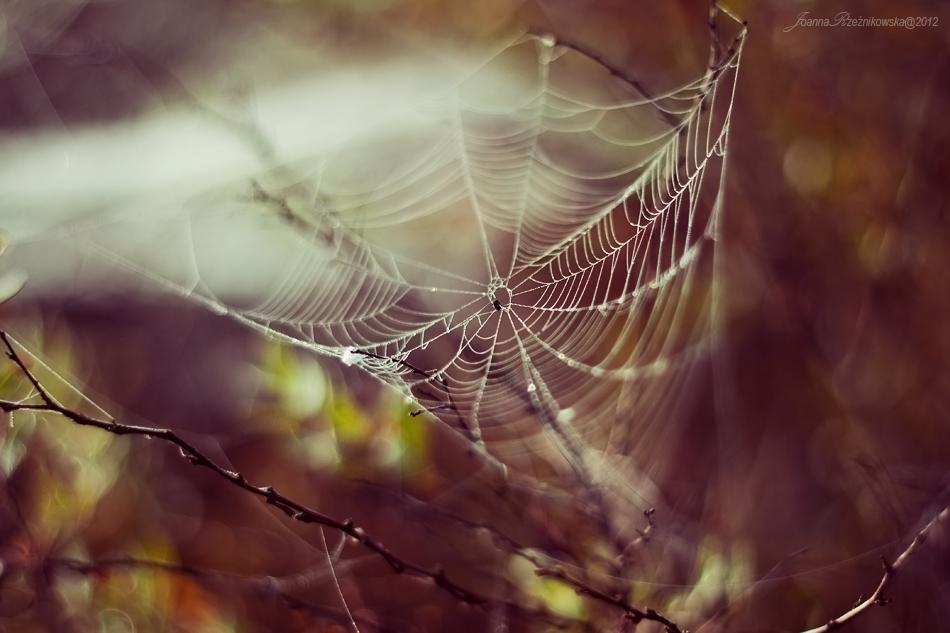 My Fairytale Dream II by JoannaRzeznikowska
