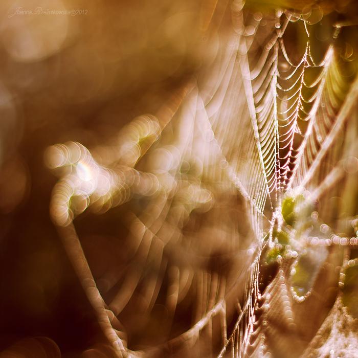 illuminate my soul VII by JoannaRzeznikowska