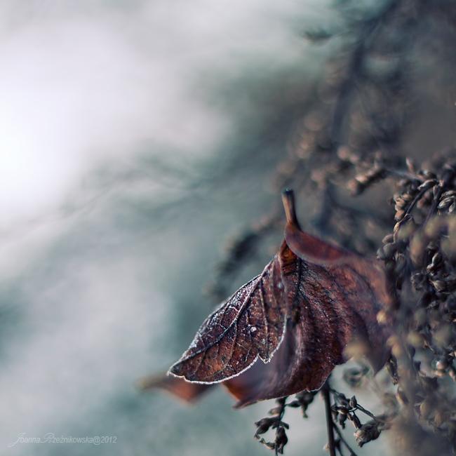 winter is close III by JoannaRzeznikowska