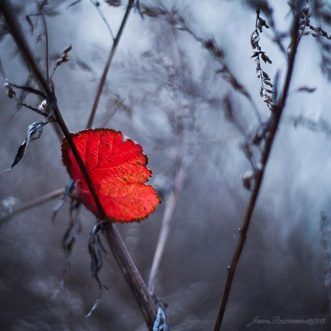 red messenger by JoannaRzeznikowska