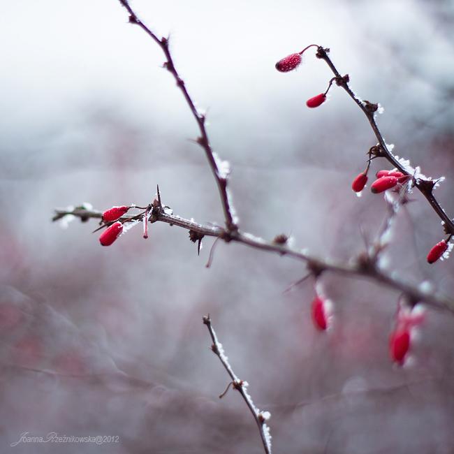 frosty days XVIII by JoannaRzeznikowska