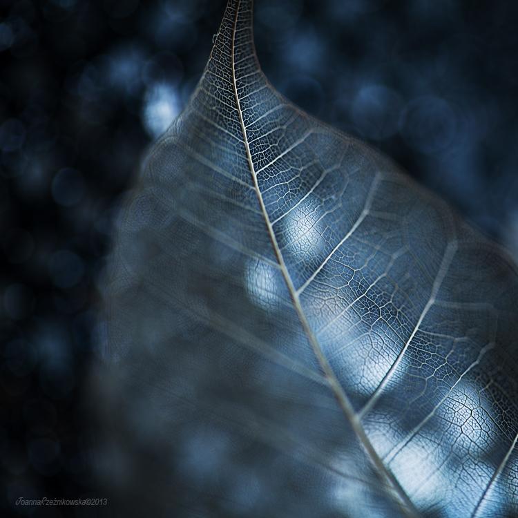 Fragile... by JoannaRzeznikowska