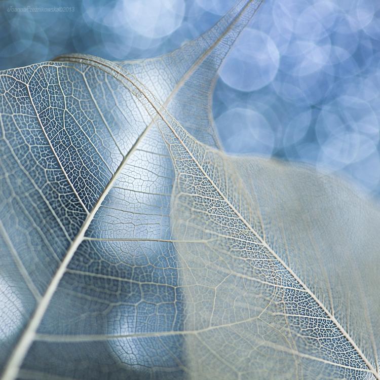 Fragile...V by JoannaRzeznikowska