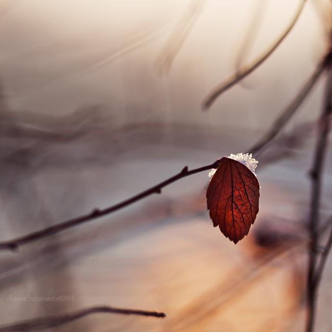 Touch Of Winter by JoannaRzeznikowska