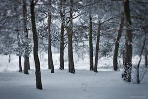 Snow In My Dreams IV by JoannaRzeznikowska