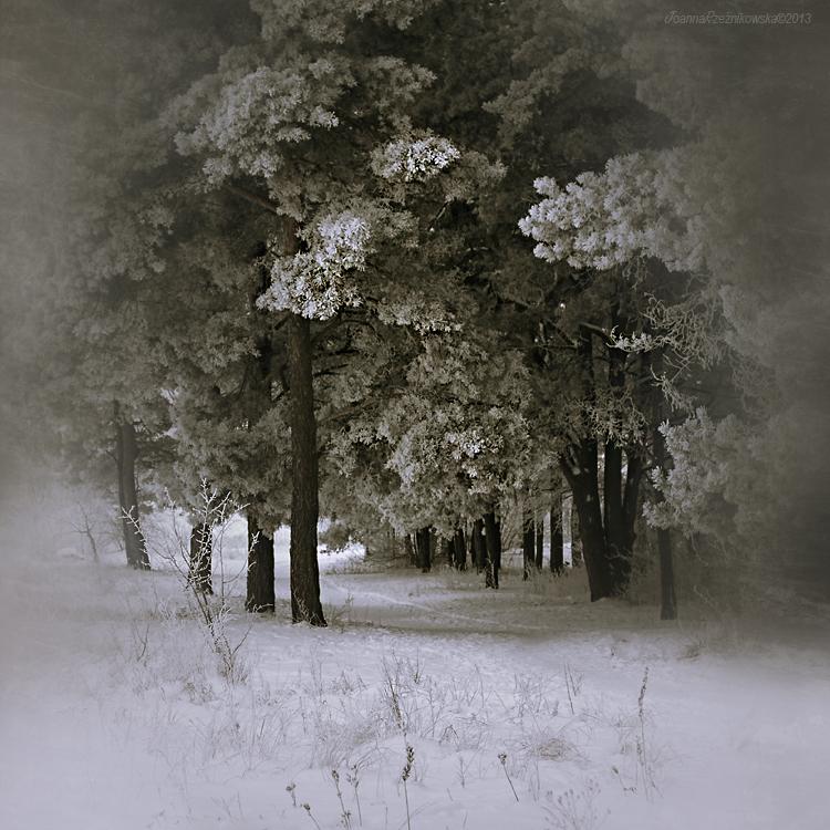 Snow In My Dreams X by JoannaRzeznikowska