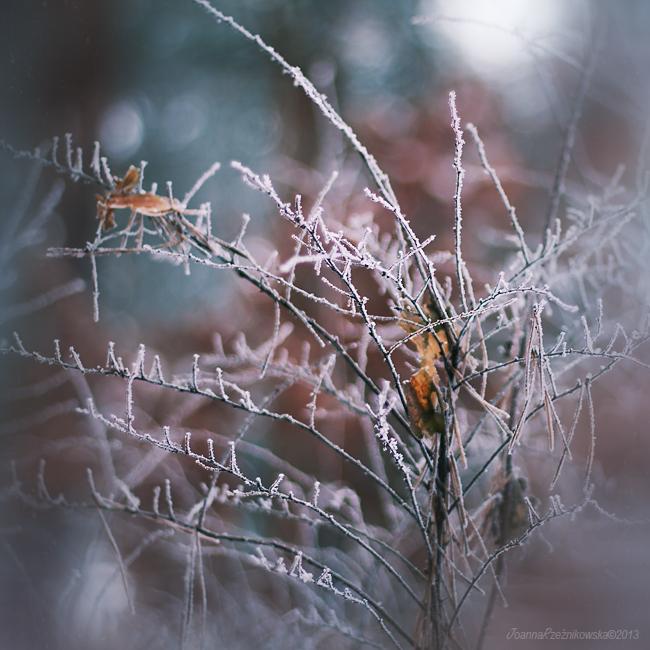 winter...winter II by JoannaRzeznikowska