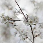 Lovely Spring VII