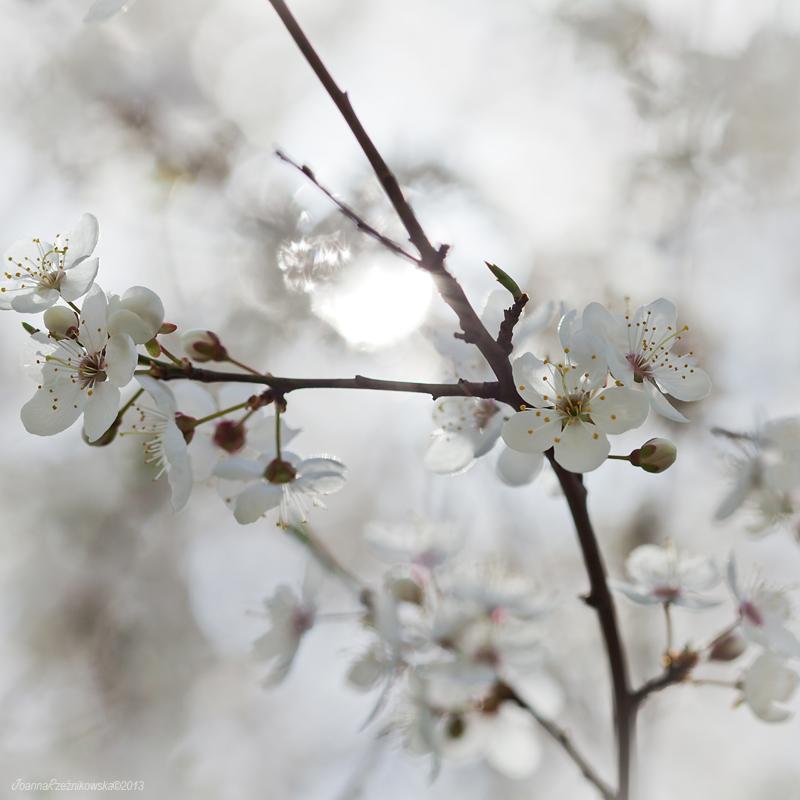 Lovely Spring VII by JoannaRzeznikowska
