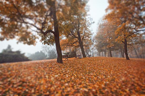 Autumn Trees III by JoannaRzeznikowska