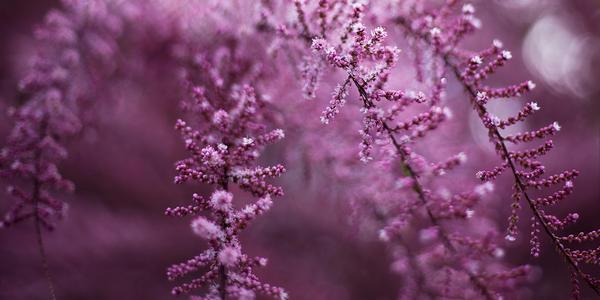 Spring wonders IV by JoannaRzeznikowska