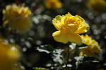 yellow queen III by JoannaRzeznikowska