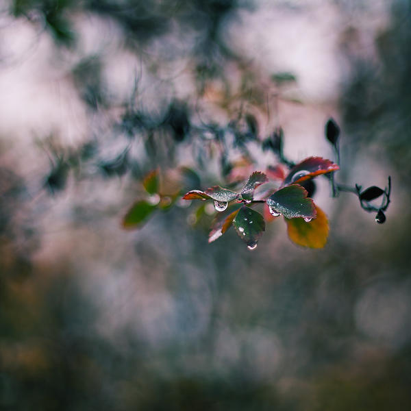 Feel My Autumn V by JoannaRzeznikowska