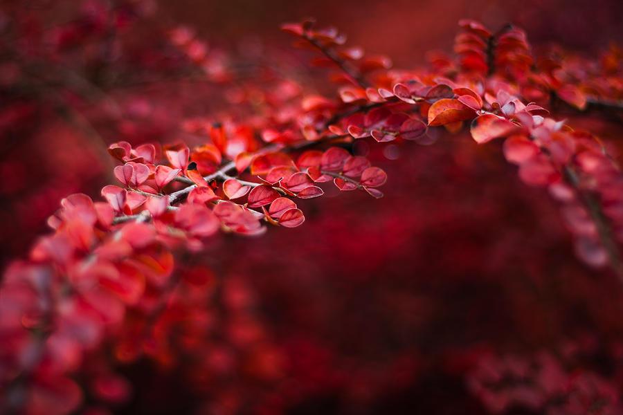 Red Red Autumn by JoannaRzeznikowska