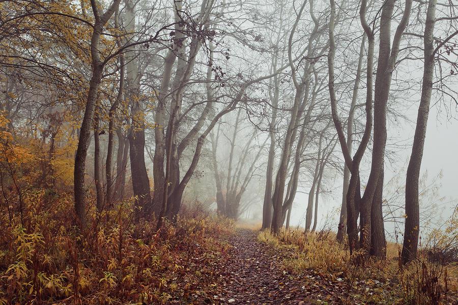 misty days X by JoannaRzeznikowska