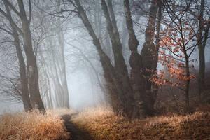 lead me into the darkness IV by JoannaRzeznikowska