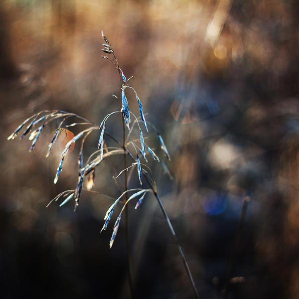 finding light VI by JoannaRzeznikowska