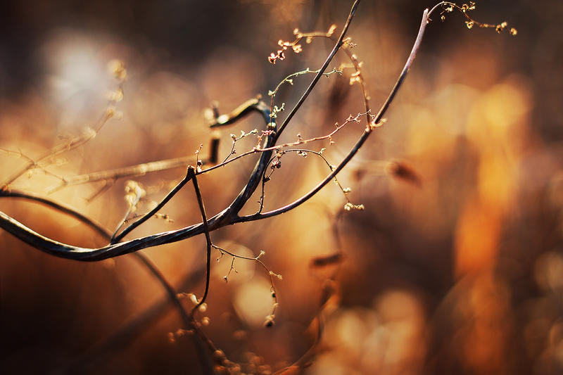 finding light VII by JoannaRzeznikowska