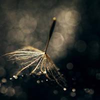 you are my light VII by JoannaRzeznikowska