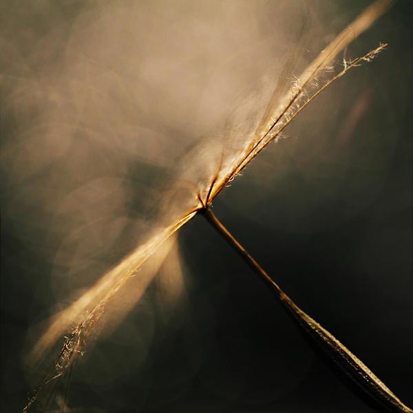 you are my light IX by JoannaRzeznikowska
