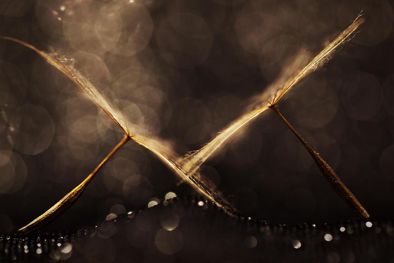 you are my light XII by JoannaRzeznikowska