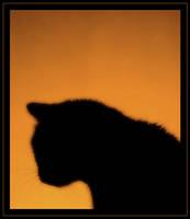 kitty by JoannaRzeznikowska