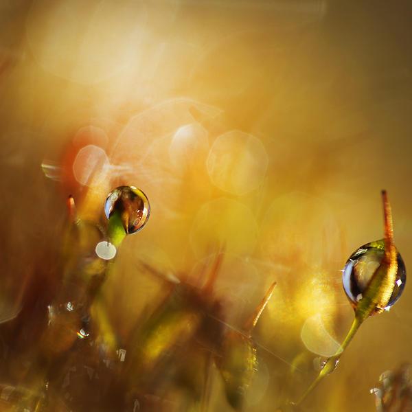 sunny moss VII by JoannaRzeznikowska