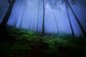Night Is a New Day IV by JoannaRzeznikowska