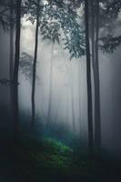Night Is a New Day VIII by JoannaRzeznikowska