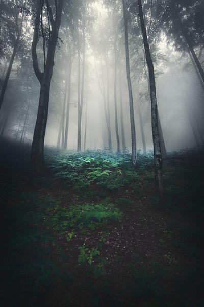 Night Is a New Day XI by JoannaRzeznikowska
