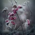 winter's tale IV