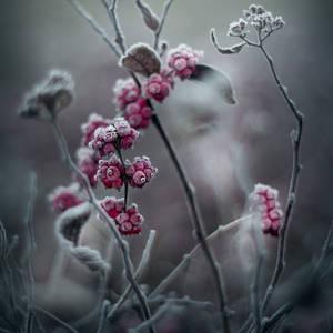 winter's tale IV by JoannaRzeznikowska