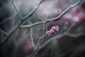 winter's tale V by JoannaRzeznikowska