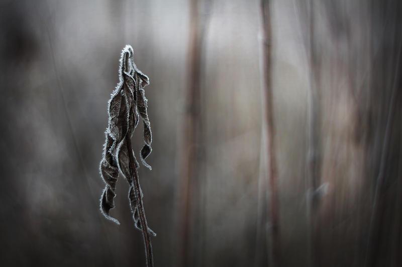 winter's tale X by JoannaRzeznikowska