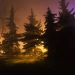 feel the night, feel the mist II