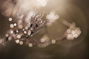 into the light by JoannaRzeznikowska