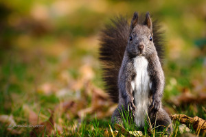 max-the-squirrel's Profile Picture
