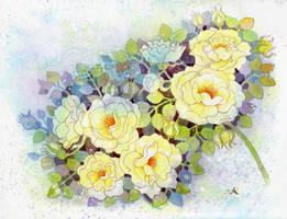 Shrub roses by isletree
