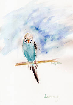 Sammy the Budgie in watercolor