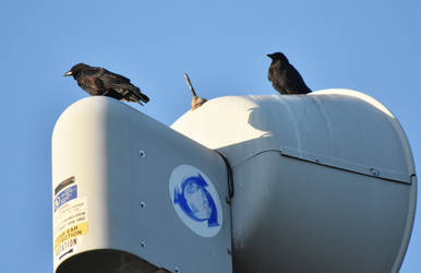 Crows on Tornado Siren by HaleyGottardo