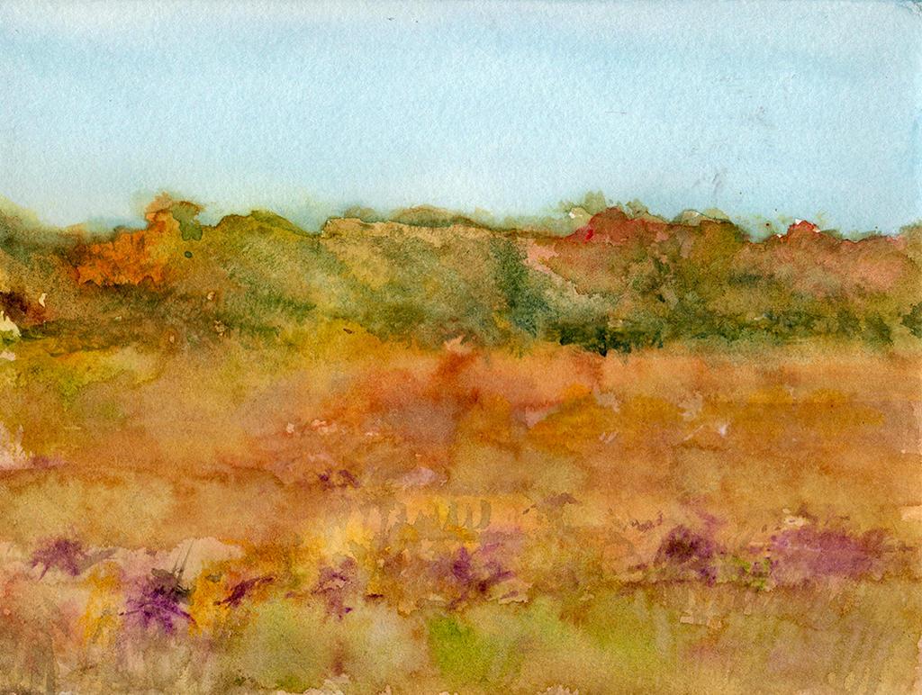 Fall Prairie Wildflower Field by HaleyGottardo