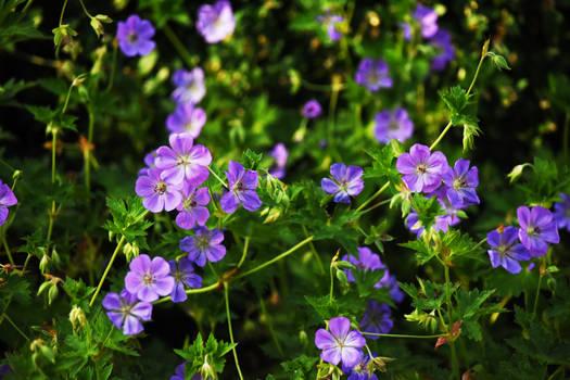 Danada Gardens in July 6