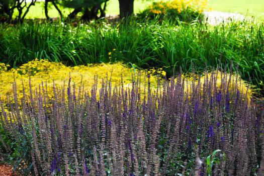 Danada Gardens in July 10