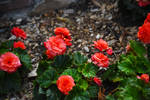 Garden Flowers at St James Farm in Aug 1