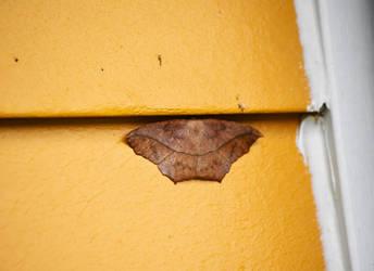Moths at St James Farm in Sept 2