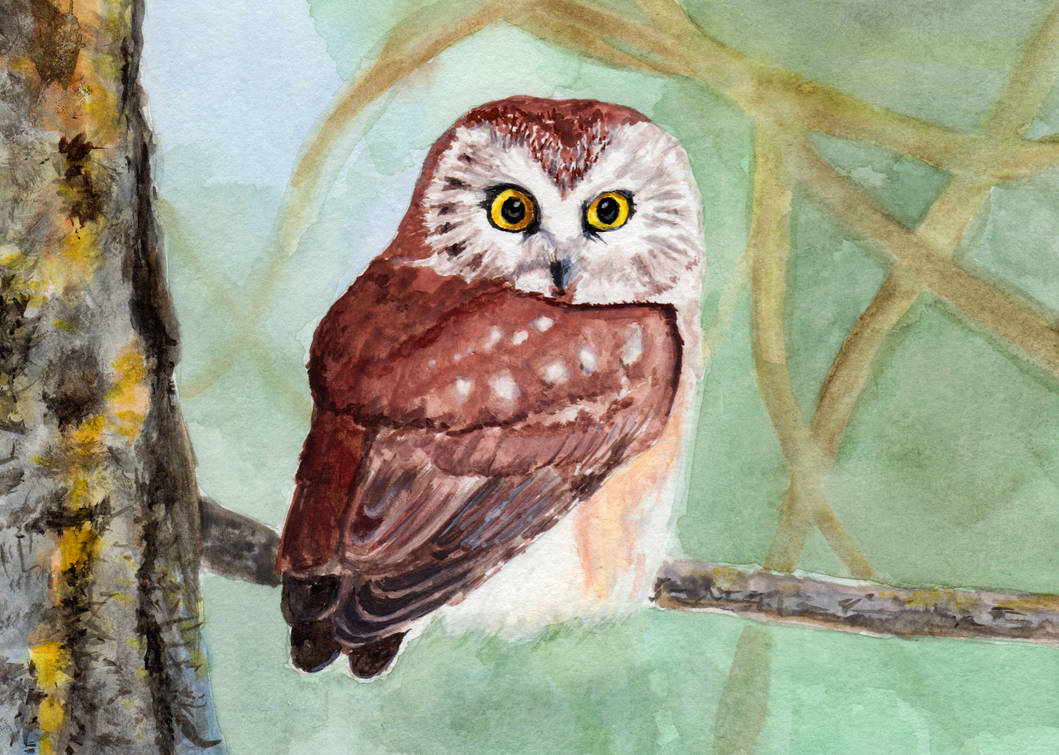 Northern Saw-whet Owl in Watercolor