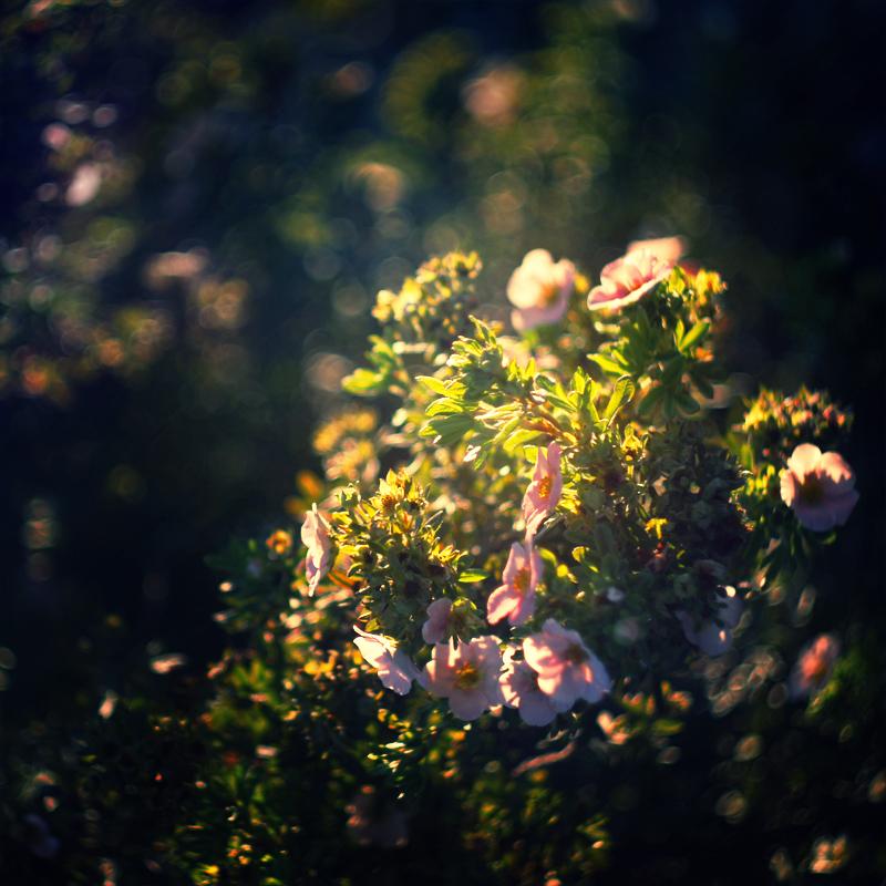 Sacred Garden by MarsiaMS