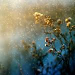 Angellore by MarsiaMS