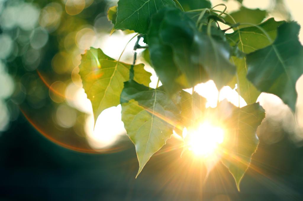 Last Midsummer Breeze by MarsiaMS