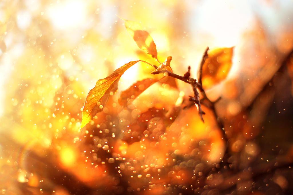 Autumn Waltz by MarsiaMS